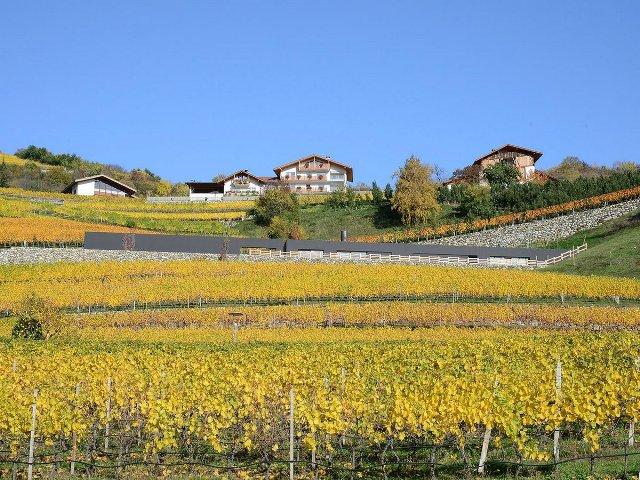 Villa-vinogradnik2